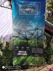 Spring Fest Exhibition